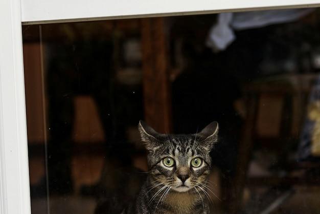 Erschrockene Graue Katze Mit Grünen Augen Sitzt Vor Dem