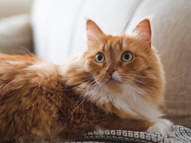 Erschrockene nette katze, die auf couch sitzt Premium Fotos