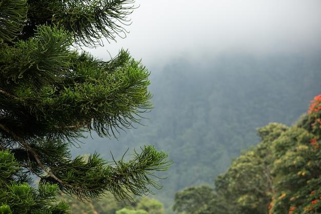 Erstaunliche ansicht der fichte in den bergen. bali. indonesien. Kostenlose Fotos