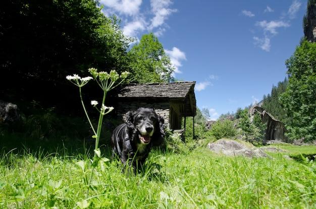 Erstaunliche ansicht eines schwarzen welpen, der in der mitte des feldes mit bäumen umgeben läuft Kostenlose Fotos