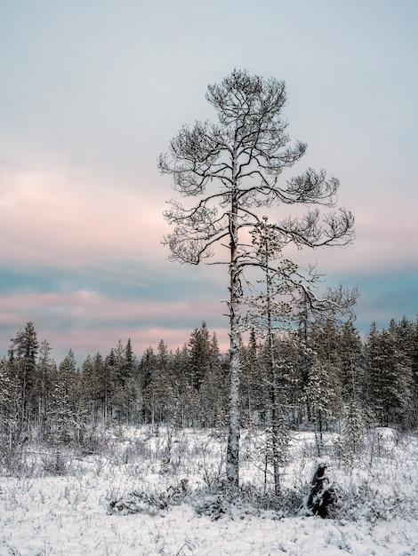 Erstaunliche arktische landschaft mit einem baum im schnee an einem polartag. Premium Fotos