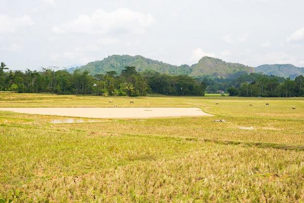 Erstaunliche landschaft von wassergefüllten reisfeldern und von szenischem cloudscape in tana toraja, süd-sulawesi, indonesien. Premium Fotos