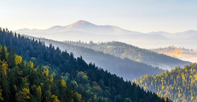 Erstaunliches weiches sonnenaufgangpanorama in den bergen. cerpathian berggipfel und hügel im herbst über den spitzen der kiefern Premium Fotos
