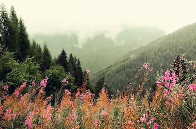 Erste frühlingsblumen auf alpenbergen Premium Fotos