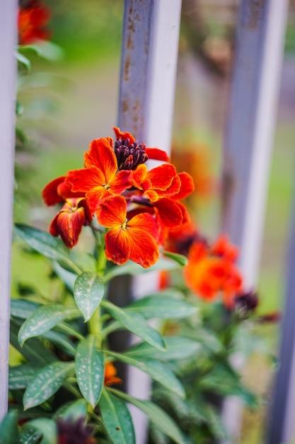 Erste frühlingsblumen in einem garten Premium Fotos