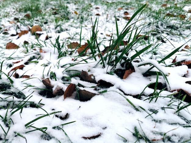 Erster schnee auf herbstlaub und grünem gras Premium Fotos