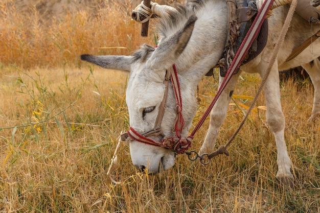 Esel frisst trockenes gras auf der weide, eselkopf Premium Fotos