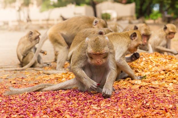 Essende affen, tempel in thailand. Premium Fotos