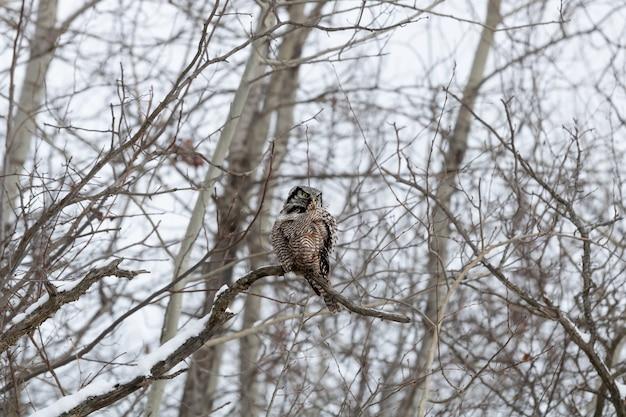 Eule sitzt auf einem ast im winter während des tages Kostenlose Fotos