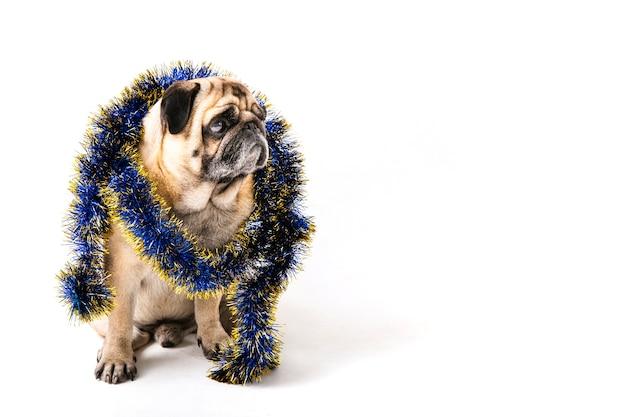 Exemplarplatzhund mit weihnachtsdekorationen auf seinem stutzen Kostenlose Fotos