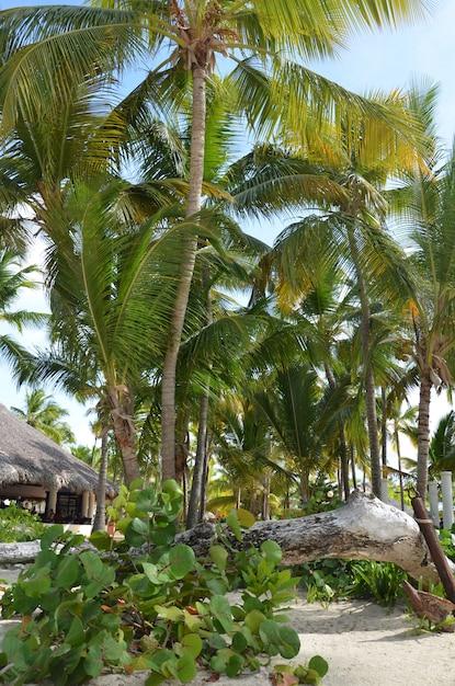 Exotischer tropischer strand mit bungalows zwischen palmen Premium Fotos