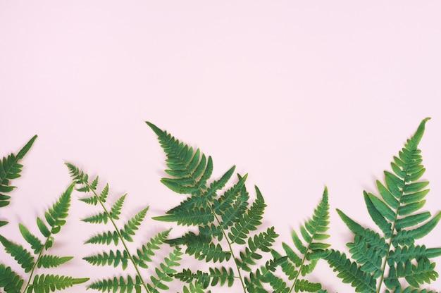 Exotisches natürliches farnblatt auf pastellrosahintergrund, naturhintergrund mit copyspace Premium Fotos