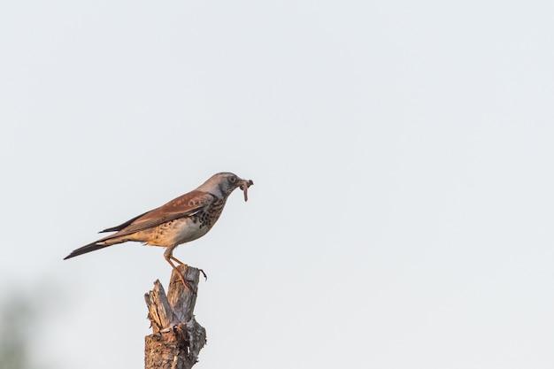 Falke auf einem pstick Kostenlose Fotos