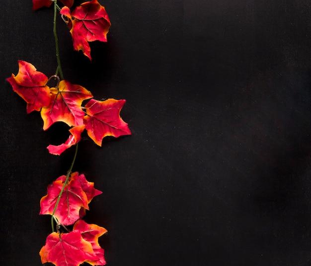 Farbiger zweig mit blättern auf schwarzem brett Kostenlose Fotos