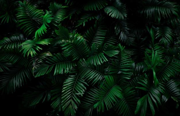 Farn verlässt auf dunklem hintergrund im dschungel. dichte dunkelgrüne farnblätter im garten bei nacht. abstrakter hintergrund der natur. farn im tropischen wald. exotische pflanze. Premium Fotos
