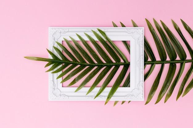 Farnblatt, das einen leeren rahmen kreuzt Kostenlose Fotos