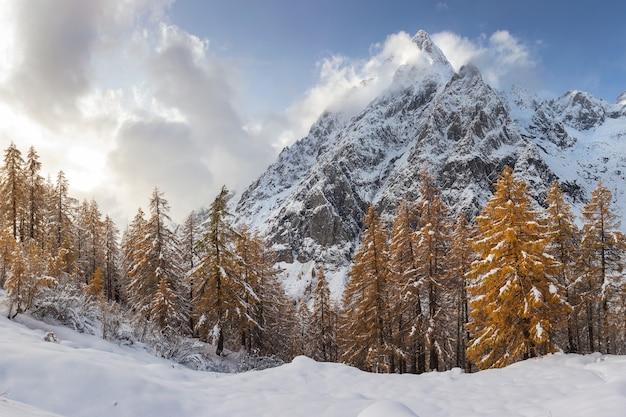 Faszinierende ansicht der bäume mit den im schnee bedeckten bergen im hintergrund Kostenlose Fotos
