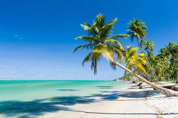 Feiertagsschatten, schönes bild von carneiros strand in pernanbuco Premium Fotos