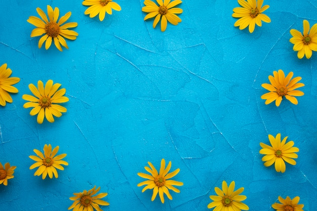 Feld der spanischen austerndistelblumen Kostenlose Fotos