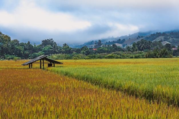 Feld in thailand Premium Fotos