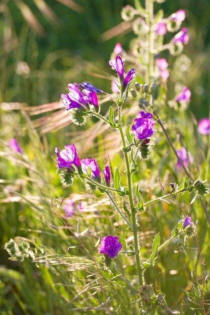 Feld mit blumen im abendsonnenlicht Premium Fotos