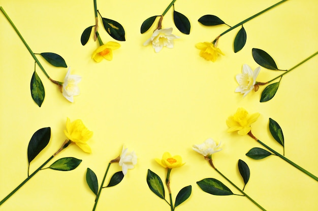 Feld von narzissen- oder narzissenblumen auf gelbem hintergrund Premium Fotos