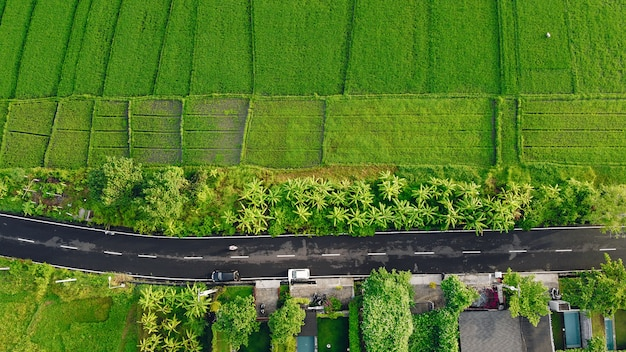 Felder in bali werden von einer drohne aus fotografiert Kostenlose Fotos