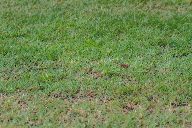 Feldhintergrund des grünen grases Premium Fotos