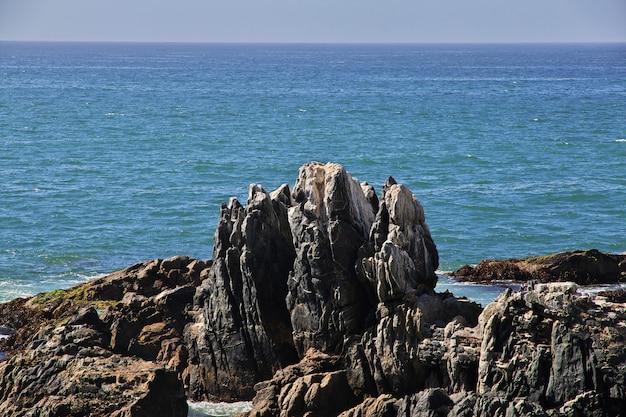 Felsen an der küste von vina del mar, chile Premium Fotos