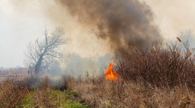 Feuer. auf dem feld brennt gras. Premium Fotos