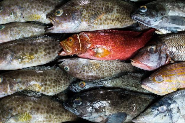 Fisch auf einem fischmarkt Kostenlose Fotos