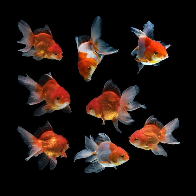 Fisch auf einem schwarzen hintergrund Kostenlose Fotos