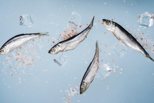 Fisch mit salz und eiswürfeln Kostenlose Fotos