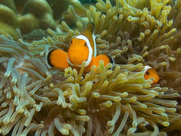 Fische, die im korallenriff sich verstecken Premium Fotos