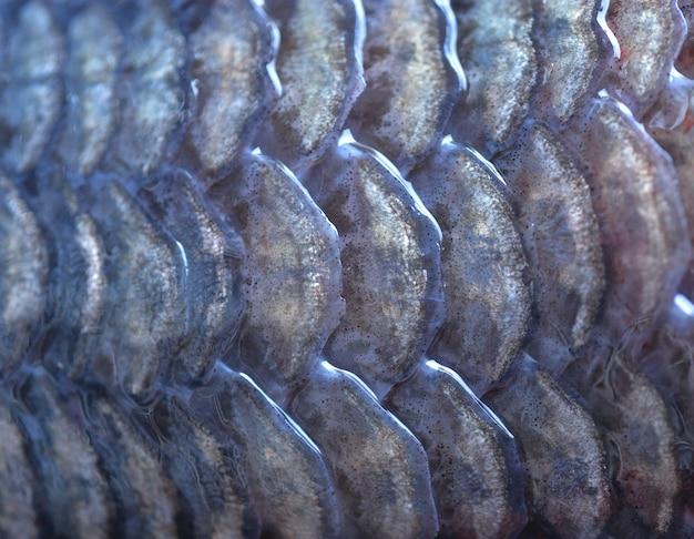 Fischschuppen hintergrund Premium Fotos