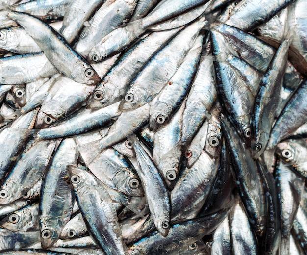 Fischsprotten am fischmarkt. Premium Fotos