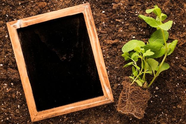 Flach lag schiefer neben der pflanze Kostenlose Fotos