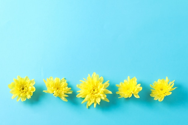 Flach liegen. gelbe chrysanthemen auf blauem tisch Premium Fotos