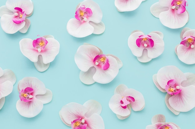 Flache anordnung der rosa orchideen Premium Fotos