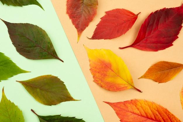 Flache auswahl an farbigen herbstblättern Premium Fotos