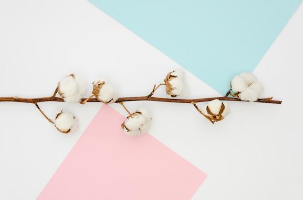 Flache gelegte baumwollblumen auf buntem hintergrund Kostenlose Fotos