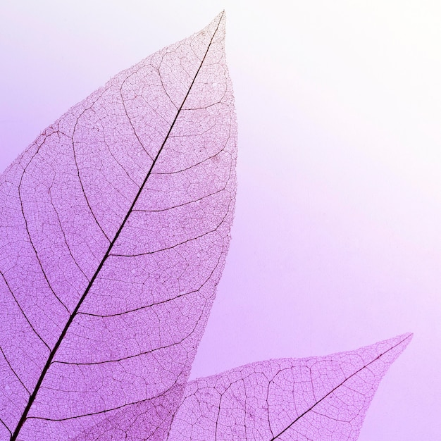Flache lage der farbigen blattstruktur Kostenlose Fotos