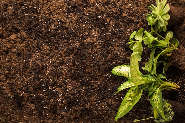 Flache lage der grünpflanze Kostenlose Fotos