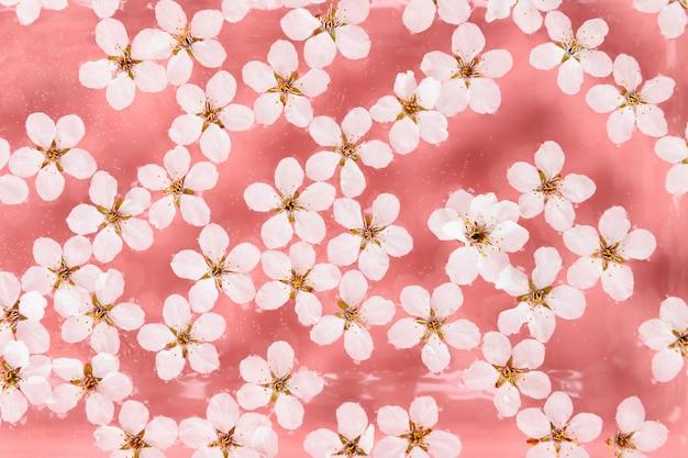 Flache lage der schwebenden wilden kirschweißblumen auf der oberfläche des wassers, pastellrosa hintergrund Premium Fotos