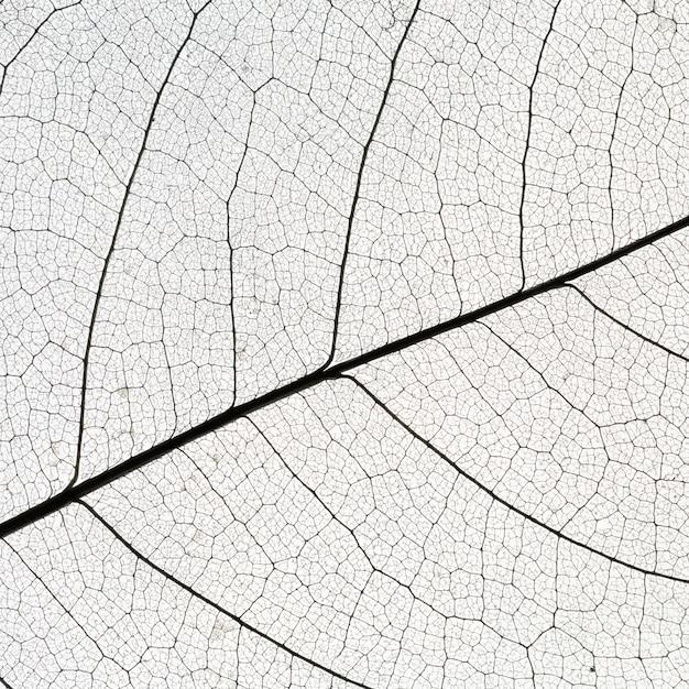 Flache lage der transparenten blattstruktur Kostenlose Fotos
