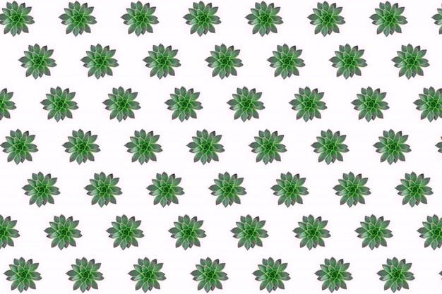 Flache lage des schönen musters der grünen succulents lokalisiert auf rosa Premium Fotos