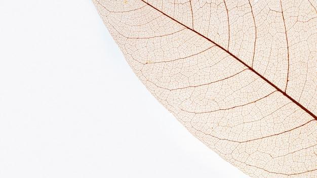 Flache lage eines durchsichtigen farbigen blattes Kostenlose Fotos