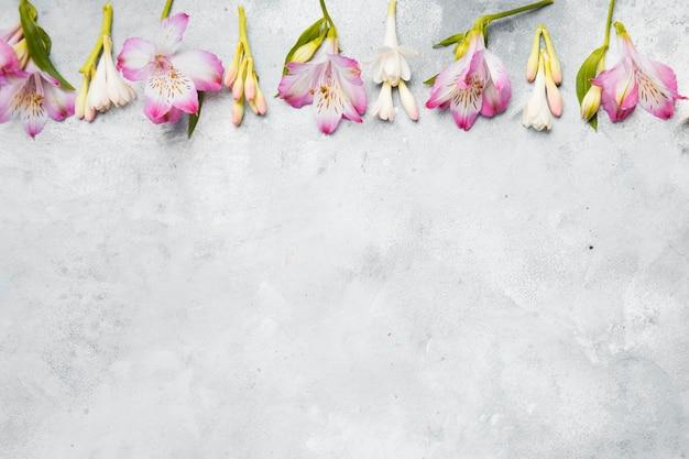Flache lage von frühlingsorchideen mit kopienraum Kostenlose Fotos