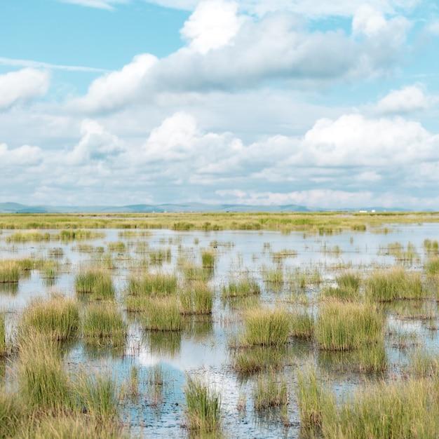 Flacher teich mit darin wachsenden pflanzen und einem blauen bewölkten himmel Kostenlose Fotos