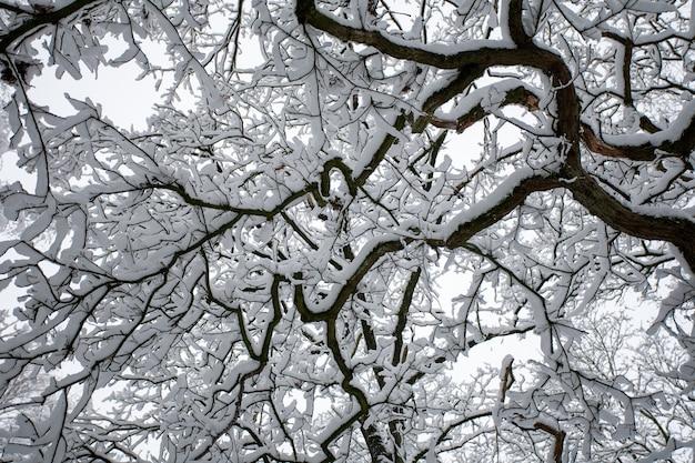 Flacher winkelschuss der zweige eines baumes, der im winter mit schnee bedeckt ist Kostenlose Fotos